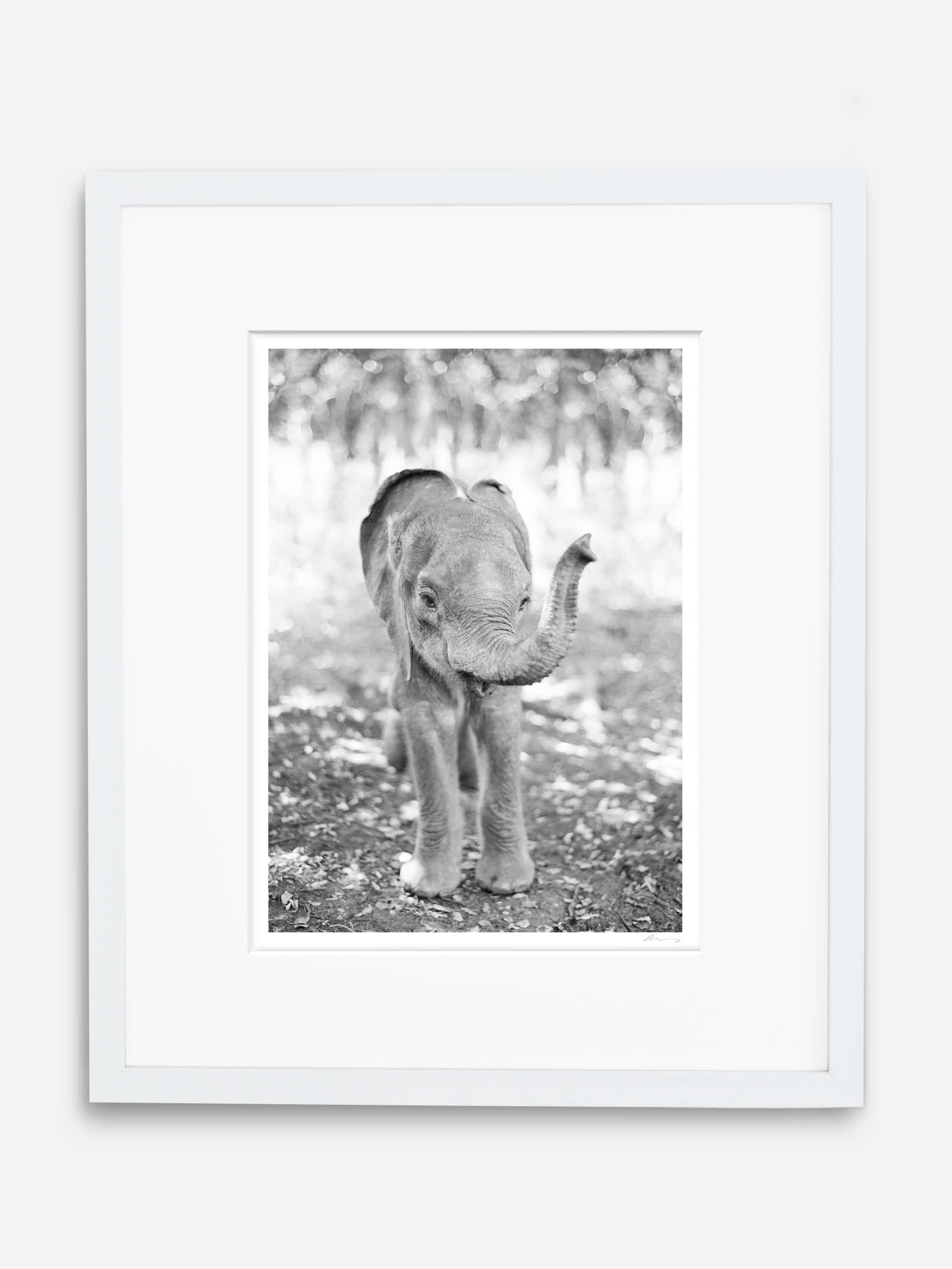 fine art baby elephant print