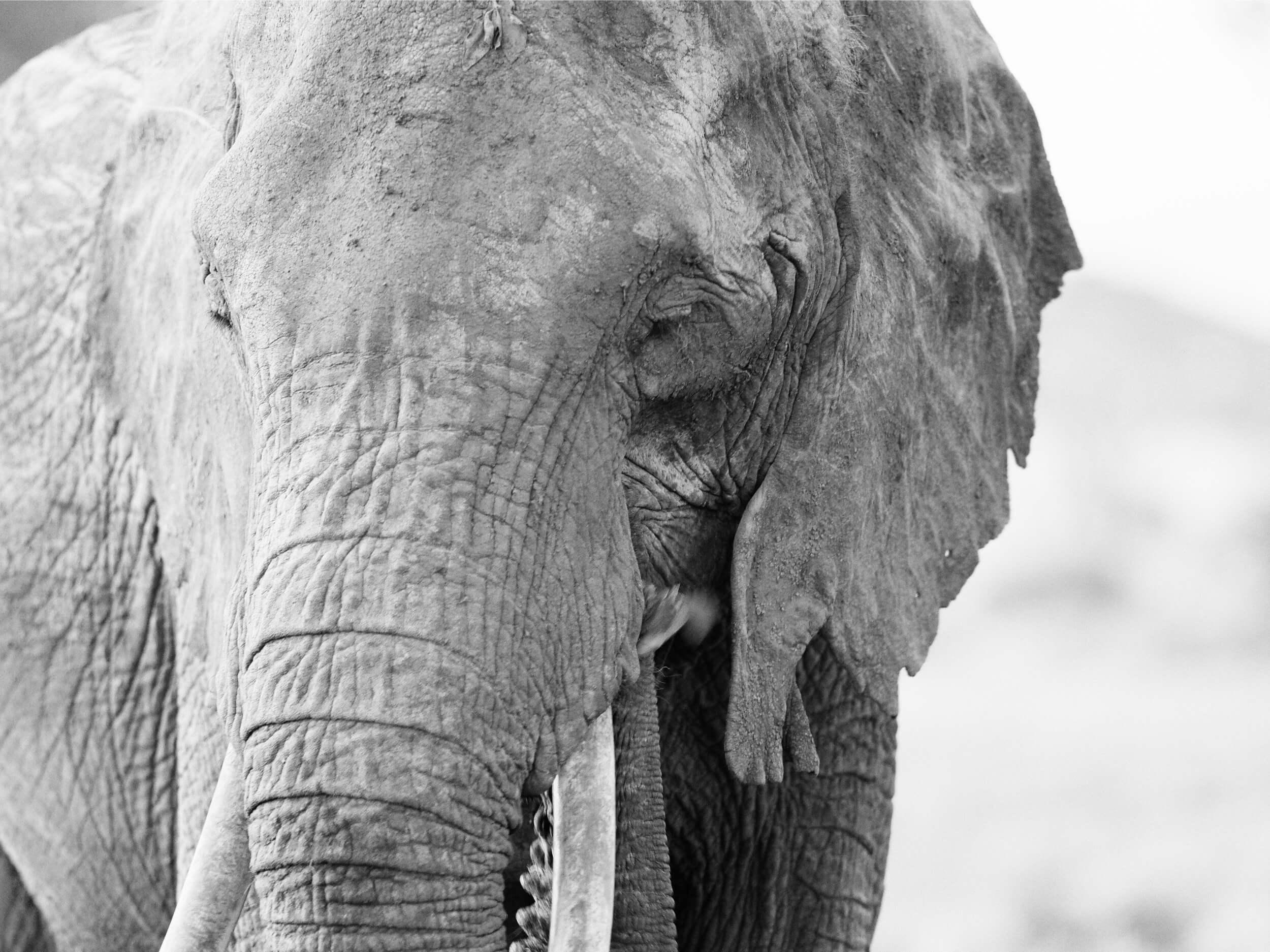 elephant the new big 5 of wildlife photography
