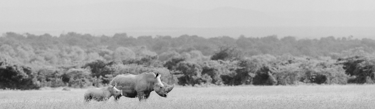 Faithful guardians of the world's last two remaining northern white rhinos.
